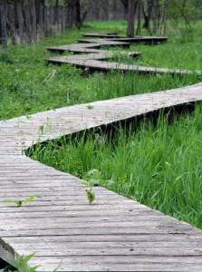 PLM Strategy Path